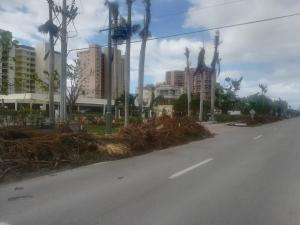 Poničené stromy